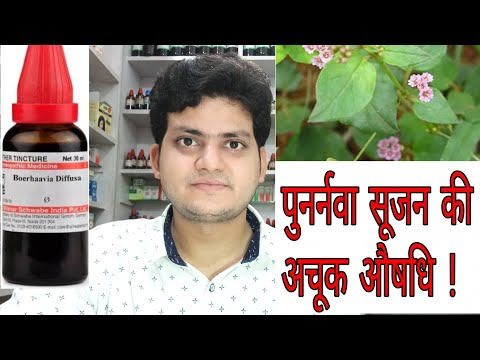 Punarnava ! Homeopathic medicine Boerhaavia Diffusa ? Sign and symptoms ! Disease and doses !