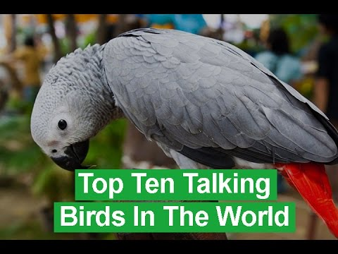 Top Ten Talking Birds