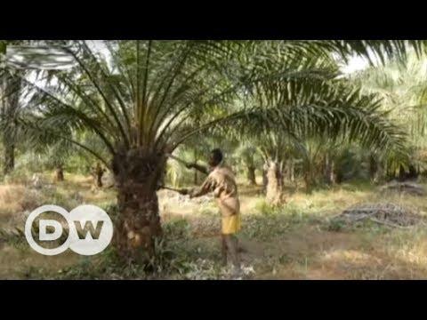 Palm Oil - cheap or fair? | DW English