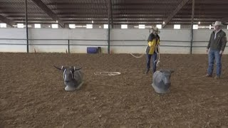Rodeo Ready: Roping