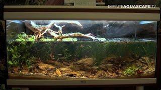 Biotope Aquarium Design Contest 2014 - The 1st Place, Australia