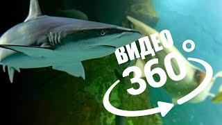 Кормим акул в океанариуме Екатеринбурга | Видео 360