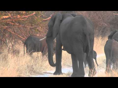 A Baby Elephant Experiments With Its Trunk - Jock Safari Lodge
