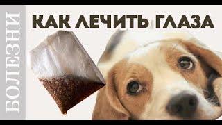 Как правильно промывать глаза чаем или травмы глаз. Советы ветеринара.