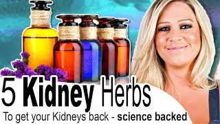 Get Your Kidneys Back - Top 5 Natural Remedies Backed by Science