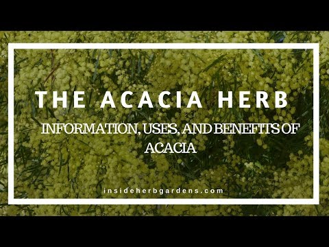The Acacia Herb: Information, uses and benefits of Acacia
