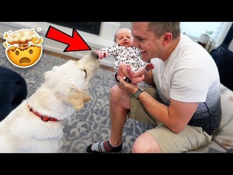 NEW BABY MEETS OUR DOG! Ellie And Jared