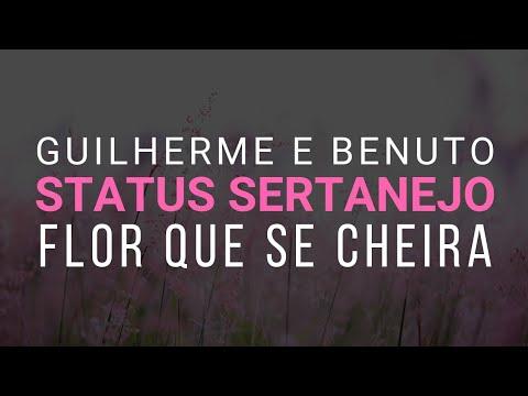 flor-que-se-cheira---status-sertanejo-whatsapp- -guilherme-e-benuto