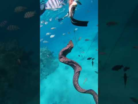Diving In Egypt 2019, Red Sea. Morena Fish Video 2