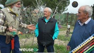 Introduzione e trucchi per l'innesto di un olivo adulto - Ernesto, Fernando e Angiolino..che TRIO!