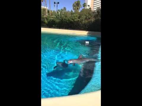Mirage Casino - Dolphin Exhibit