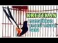 Suara Kretekan Murai Batu Cocok Buat Pikat Macet Total  Mp3 - Mp4 Download