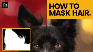 HOW TO MASK HAIR IN PHOTOSHOP Tutorial for Dog Hair Masking in Photoshop CC 2020