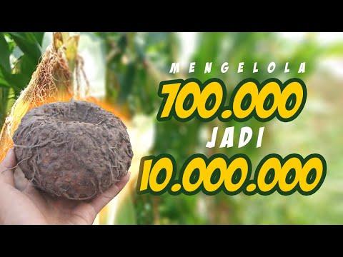 MENGOLAH 700 RIBU Jadi 10JUTA