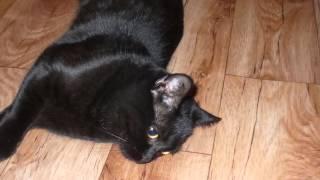 видео посвещённое моему коту.wmv