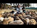 Japon : l'île aux lapins - ZAPPING SAUVAGE