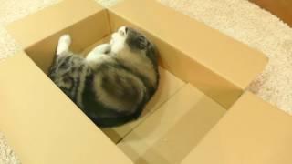 またたびボールと箱とねこ。-Catnip ball and the box and Maru.-