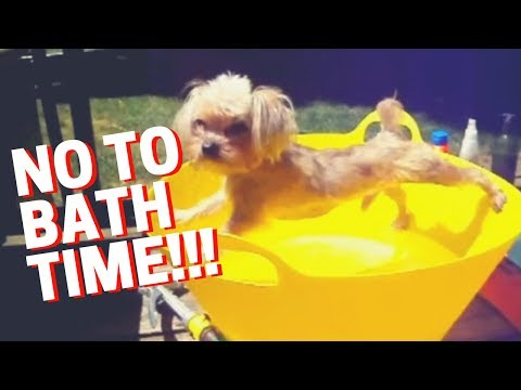 🔴 Dog Doesn't Want to Take a Bath - Funny Dog Bathing Compilation