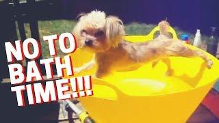 http://www.gifbin.com/bin/062011/1308916127_dog_doesnt_wan_to_bath.gif