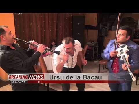 Ursu de la Bacau-Forta 2014 Tel:0742.640.102 Full HD 1080P 1