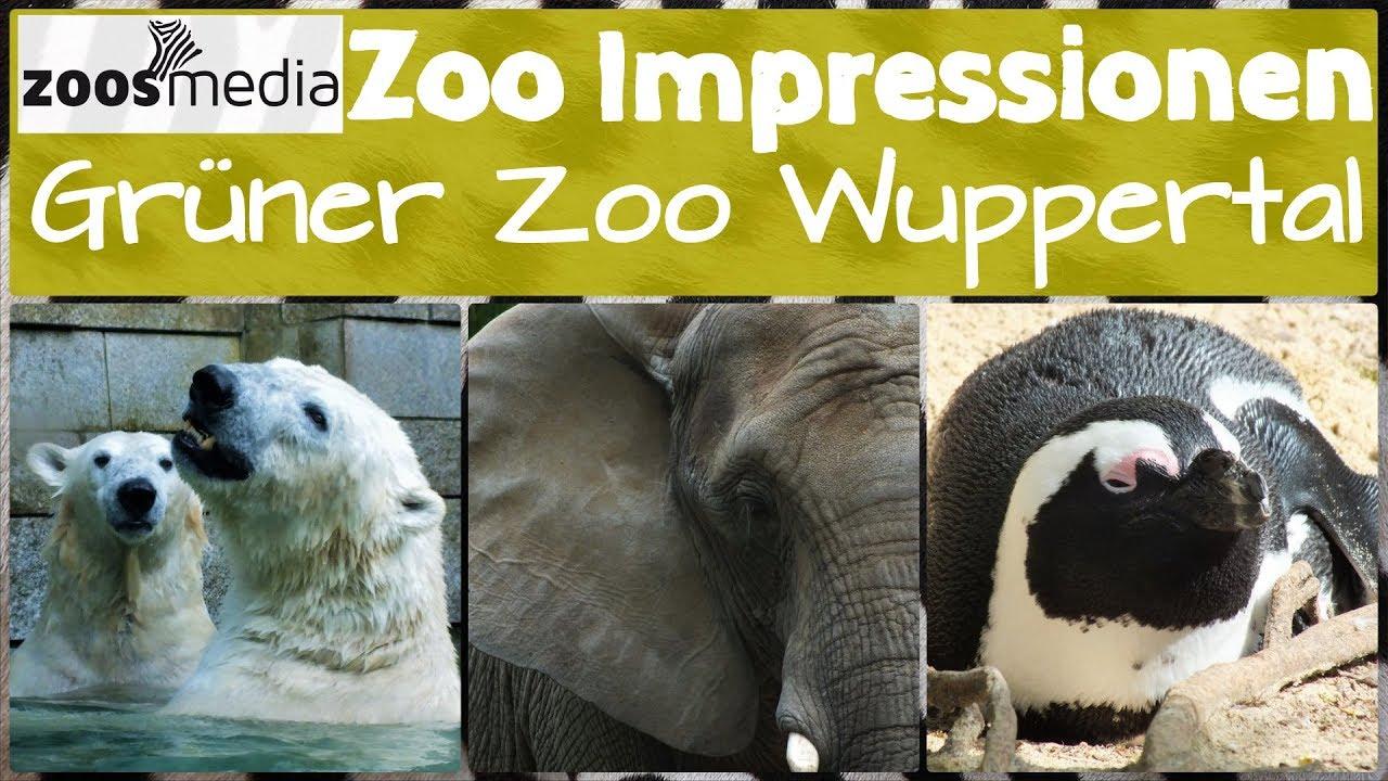 zoo impressionen gr ner zoo wuppertal throwback youtube. Black Bedroom Furniture Sets. Home Design Ideas