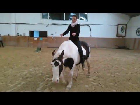 Bild: Pferdeprofi Sandra Schneider und weitere Pferdeprofis