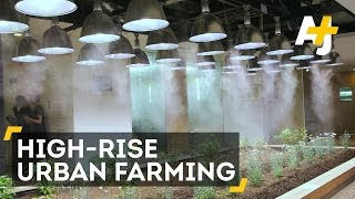 Office Farming In Japan May Transform Agriculture