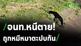 ระทึก! จนท.อุทยานถูกหมีหมาไล่ตะปบบาดเจ็บ   29-03-64   ไทยรัฐนิวส์โชว์