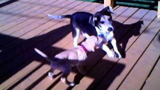 Video Jessica and New Puppy.avi download MP3, 3GP, MP4, WEBM, AVI, FLV Desember 2017