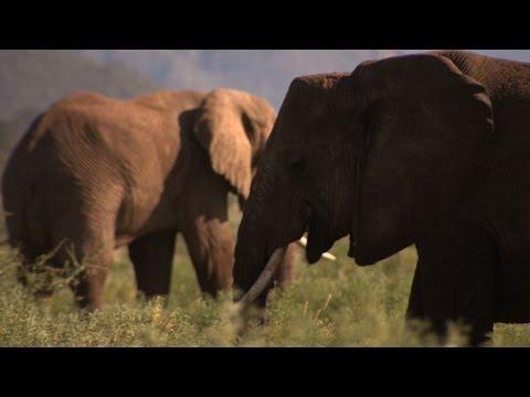 "Masacre de elefantes, ""fuera de control"""