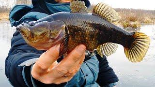 ВОТ ЭТО МОНСТРЫ Зимняя рыбалка НА ДРАКОНА Первый лед 2019 2020