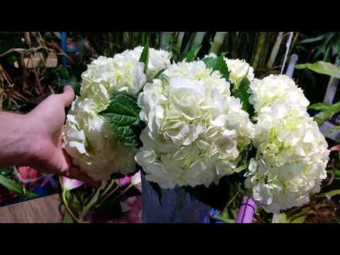 Gardening VLOG! Drought. Carnivorous Plant Dormancy. Arranging Flowers. Aquaponics Mod. Orchid Pots?
