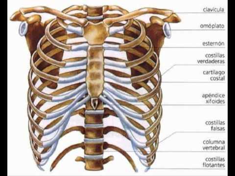 Sistema óseo, características generales - YouTube