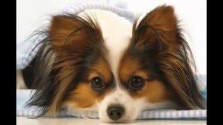 Топ 10 самых умных пород собак( названия в описание)