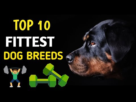 TOP 10 FITTEST DOG BREEDS / fittest dog breeds