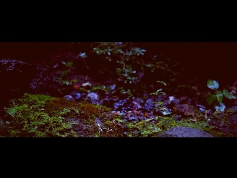 Fiersa Besari - Rumah (Cinematic Video)
