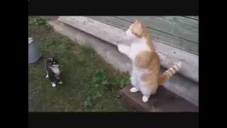 Смешные кошки. Сметана вкусно, а валерьянка вкусней!