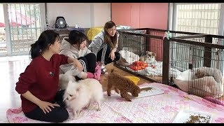 Download Video Yerin, Joy, and Hayoung at dog shelter MP3 3GP MP4
