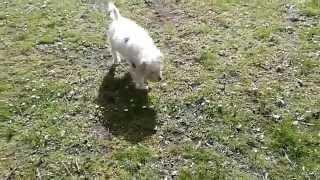Crossbread Terrier Around Leith, Edinburgh