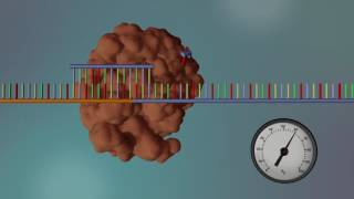 DNA Sequencing - 3D