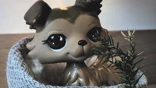Littlest Pet Shop: Žraločí zahrady {Epizoda #5: ,,Je tak bezcenná''}