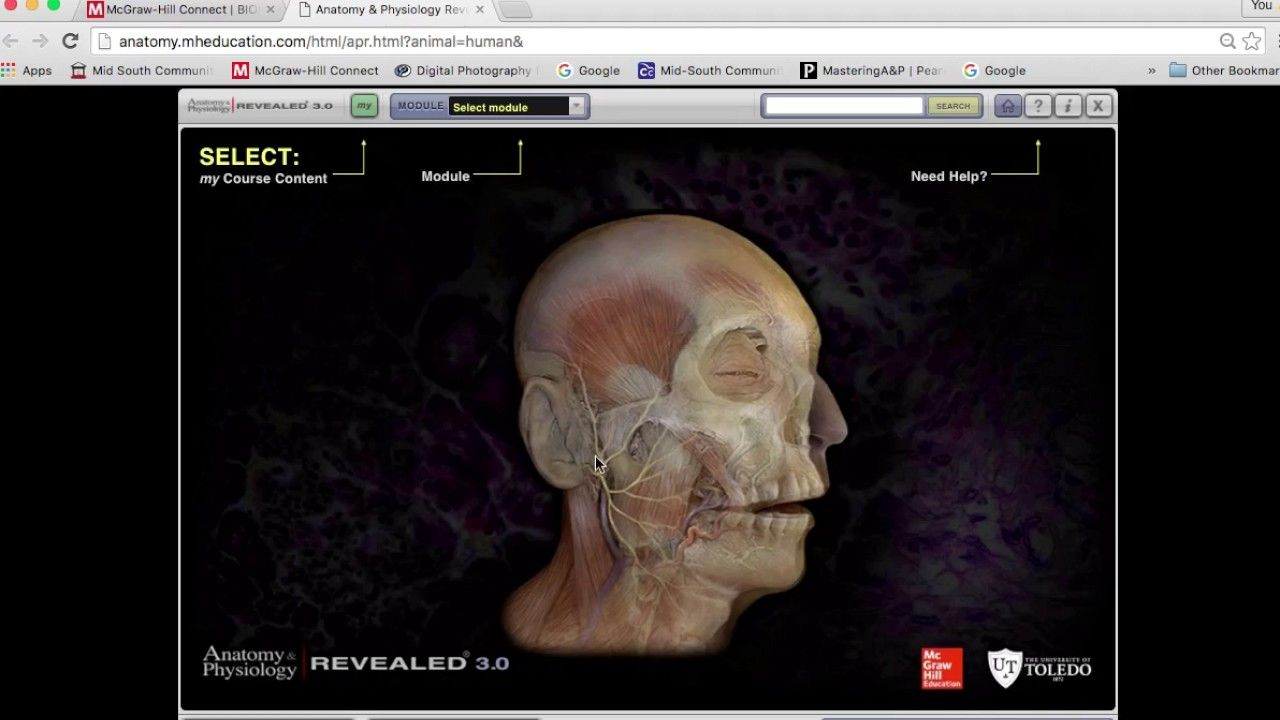Awesome Mcgraw Hill Anatomy And Physiology Revealed 3.0 Crest ...