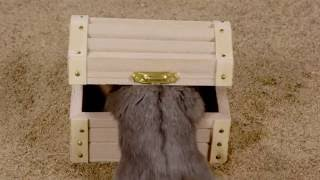 Teaser/Trailer for Hamster Treasure Hunt