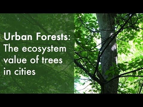 Urban forests and their ecosystem services | Dr David Nowak (2015)