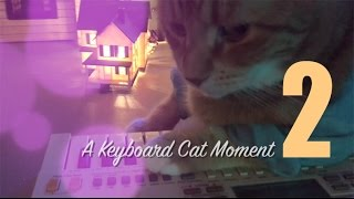 Keyboard Cat Moment 2