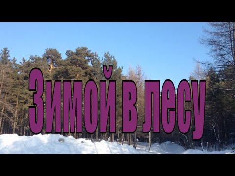 Лес зимой , красивая природа, прогулка. Заельцовский бор Новосибирск.