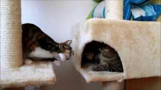 Bobo & Nikita Cats Together