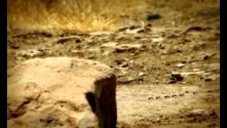 Csodabogarak - A tücsök dala (3.évad 5.rész)