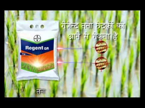 regent ad hindi