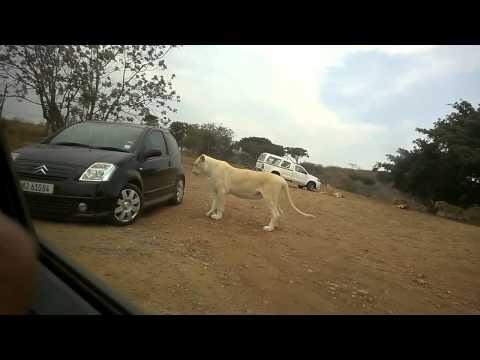 Lions Park Adventure